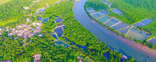 海洋功能区划红树林海岸为生物海岸,是海洋生态系统中生物多样性最